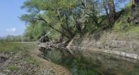 В Приднестровье возрождают леса
