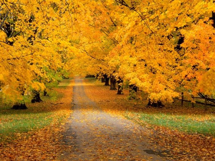 Октябрь во всей красе (Фото)