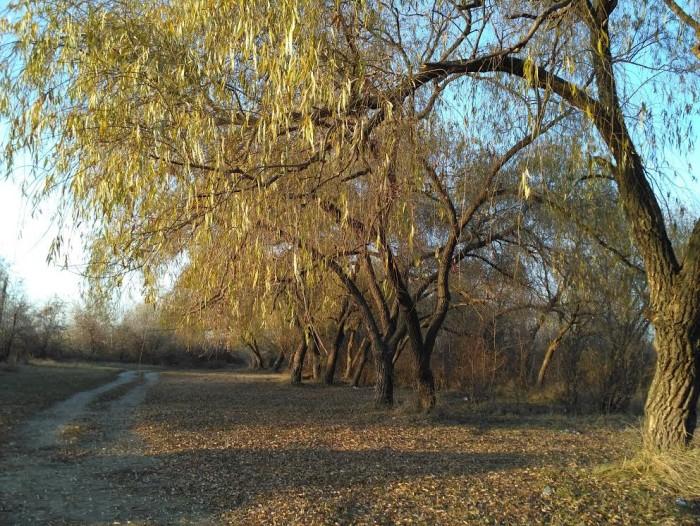 Под сенью зеленого рая