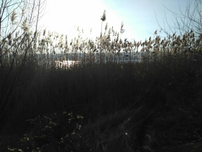 Под сенью зеленого рая (+Фото)