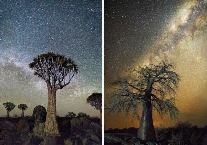 10 фотографий самых старых деревьев под звёздным небом