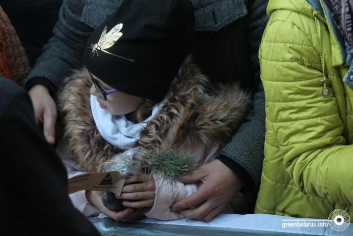 Фоторепортаж: Как кедровая лихорадка охватила минчан