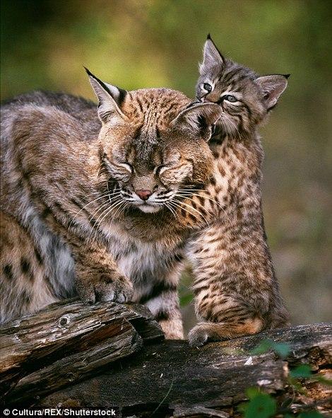 Чудесные фотографии звериных мамочек со своими детёнышами
