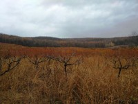 Здесь есть все, что тебе надо!  Последние дары осени в молдавских лесах (+Фото)