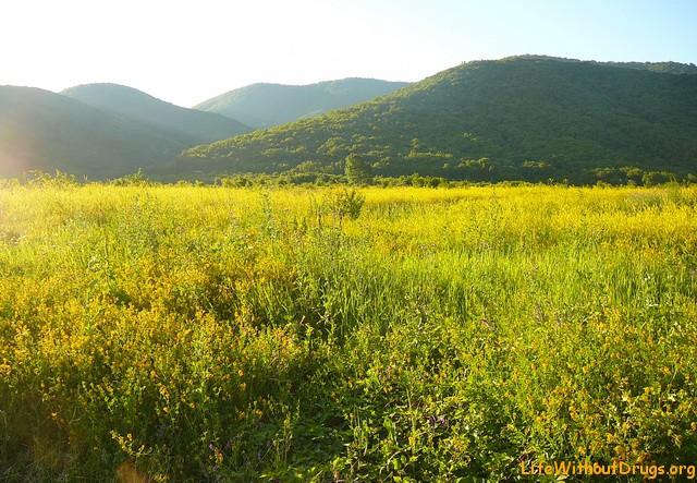 Село Береговое находится в долине среди гор и... Дольменов (+Фото)