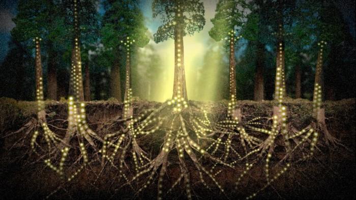 Лесник из Германии Питер Вохлебен, автор нашумевшей книги «Тайная жизнь деревьев», рассказал про социальную жизнь деревьев