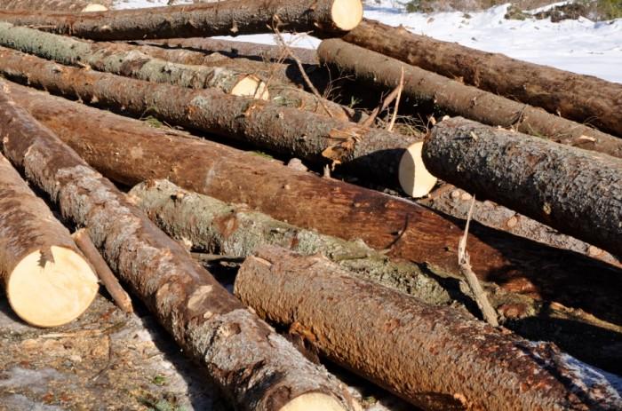 Министр окружающей среды борется за правильное использование лесных угодий в отопительный сезон