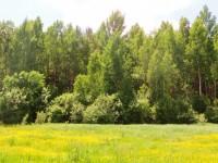 Лес – один из самых дешевых источников природных богатств, но каждую минуту уничтожается 20 га лесных территорий (+Видео)
