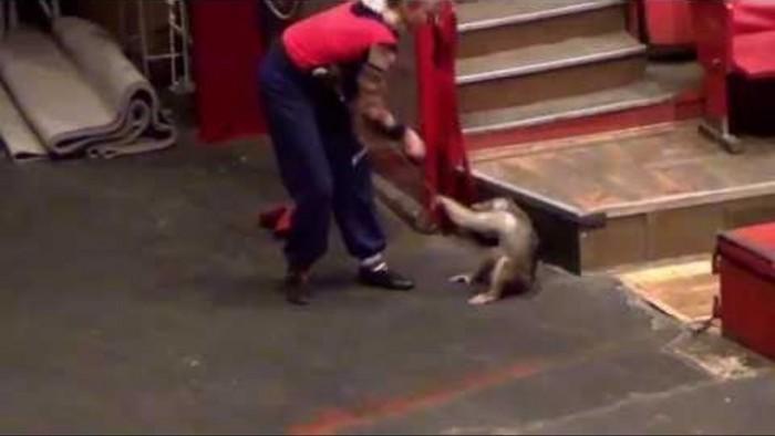 Издевательство над животными в цирке! Это должен знать каждый (Видео)