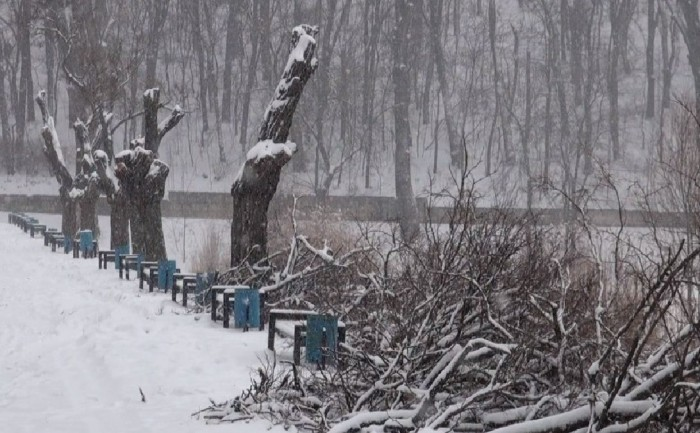 Вырубки деревьев в парке «Valea Trandafirilor» («Долина Роз») были произведены незаконно, без согласования с компетентными специалистами