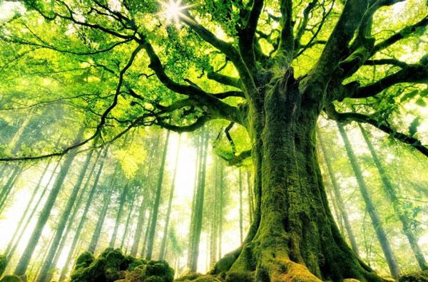 Как деревья разговаривают друг с другом - технология получше Wi Fi (Видео)
