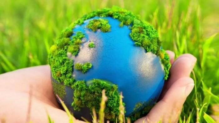 На экологических уроках детей учат сажать собственный лес (Видео)