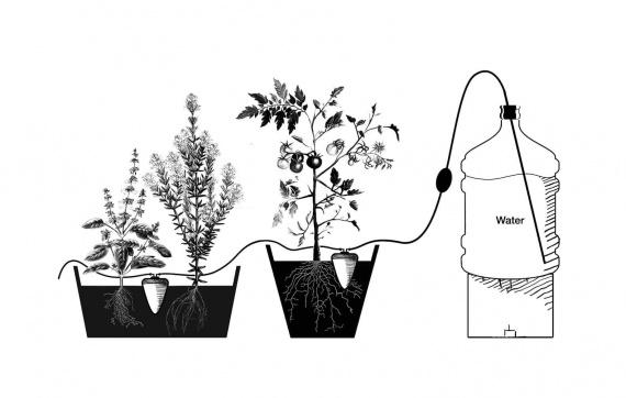 Сегодня можно целый месяц не поливать растения благодаря древнеегипетской керамике