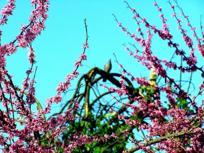 Ботанический сад после апрельских снегопадов стал еще красивее сильнее и лучше!