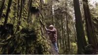 Un bărbat salvează cei mai mari arbori