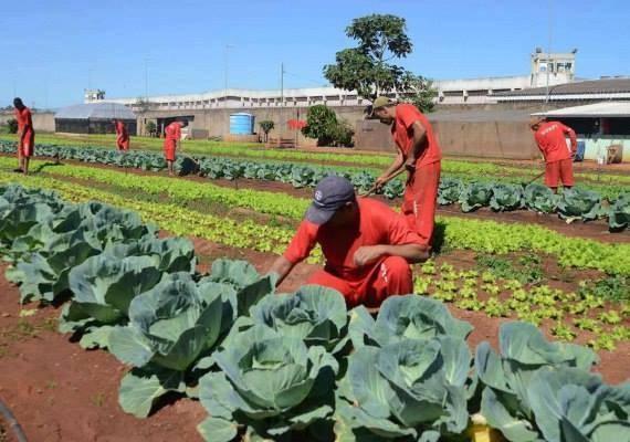 В этой тюрьме заключенные выращивают свои собственные продукты питания.
