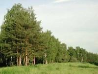 Лес - единственный на земле живой завод по производству кислорода