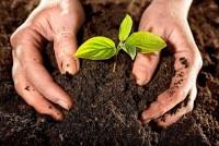 Почва волшебная субстанция, дающая жизнь всему живому