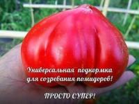 Тот, кто подарит внимание помидорам получит урожая намного больше. Проверенно!