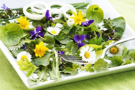 Сорняки которые можно использовать в пищу и в медицинский целях