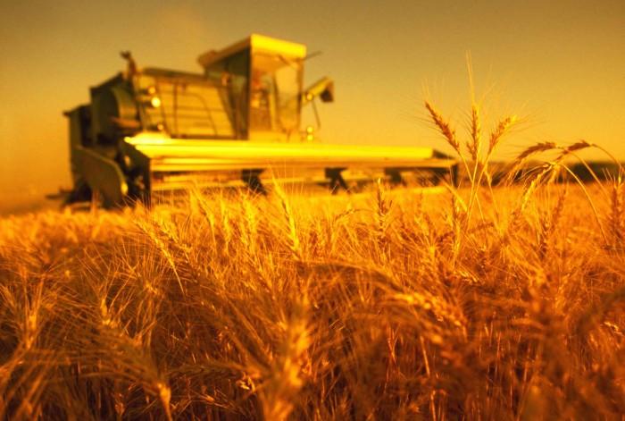 Отказ от применения пестицидов дает устойчивые урожаи и финансовую стабильность