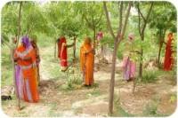 По одному плодовому дереву для каждой новорождённой девочки в Индии (+Фото)