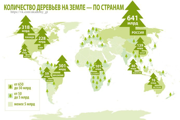На земле деревьев становится больше. В России рекордный рост 4400 деревьев на 1 человека