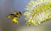 Пчел выгодно содержать даже ради опыления