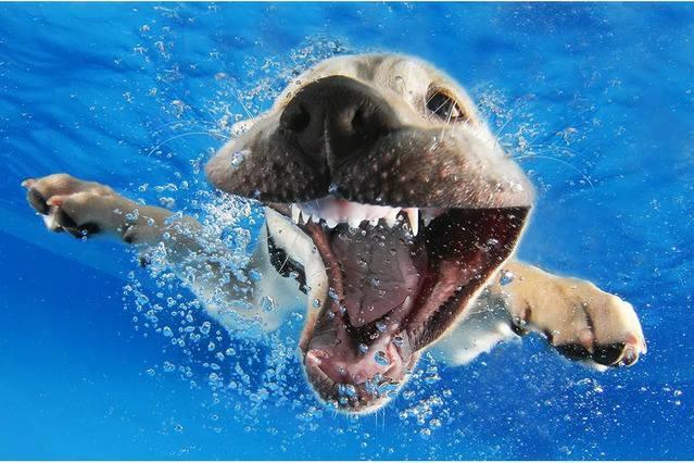 Животные в свободном плавании (Фото)