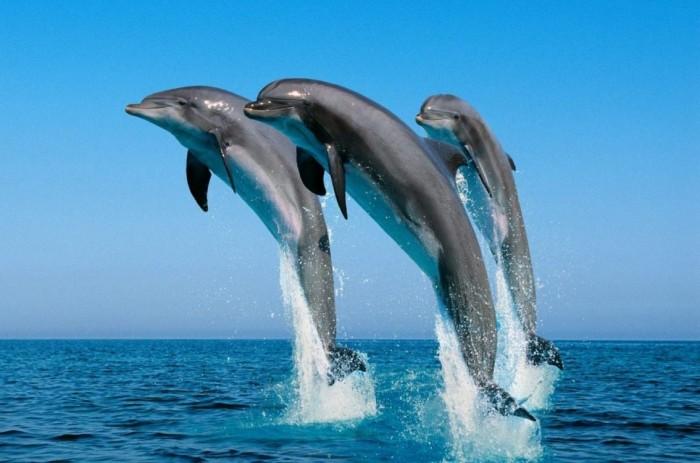 Горькие слезы дельфинов (+Видео)