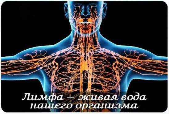 Лимфа - река жизни человеческого организма! Плюс рецепт ее очищения...