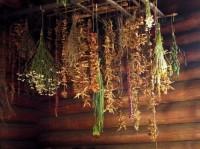 Все о качественной сушке лекарственных растений