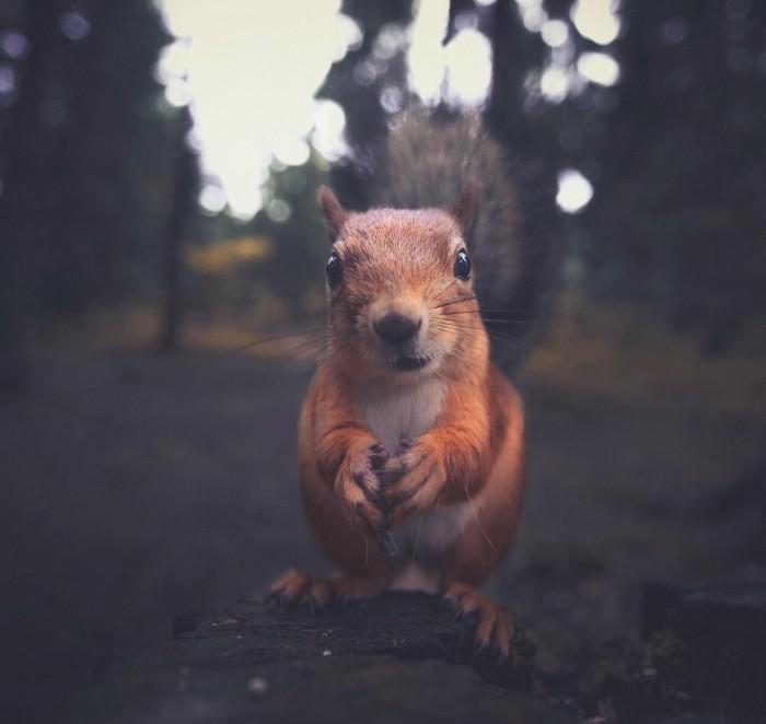 Есть ли душа у леса? Есть и она в его лесных обитателях (Фото)