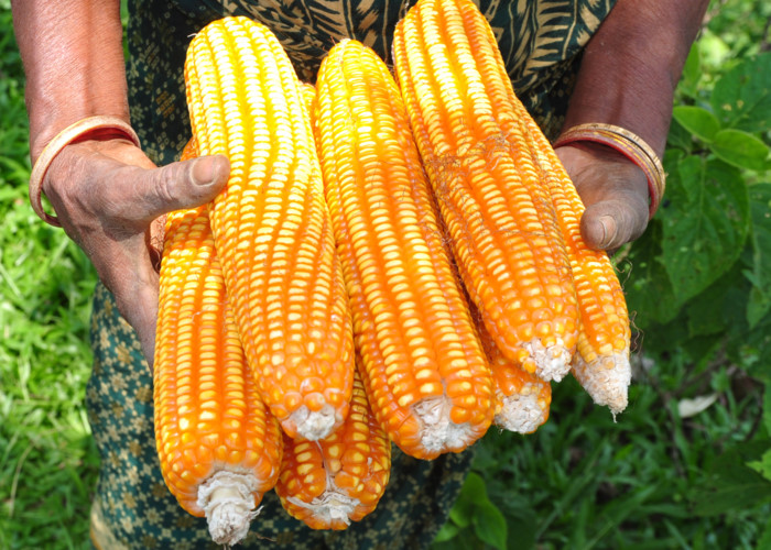 Новый мировой порядок от Монсанто - мир основанный на ГМО (Видео)