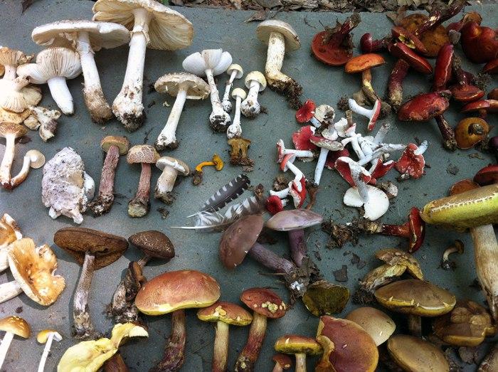 Красим одежду натуральными красками из грибов (+Фото)