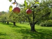 Каждое плодовое дерево любит свою почву и от этого зависит хороший урожай