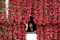 Вся деревня украшена перцем (Фото)