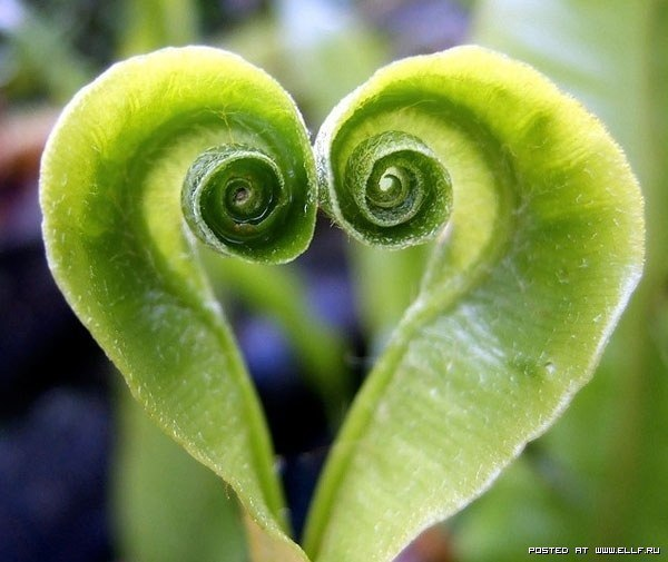 Природа признается нам в любви! (Фото)