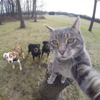 Селфи с котом и его друзьями (Фото)