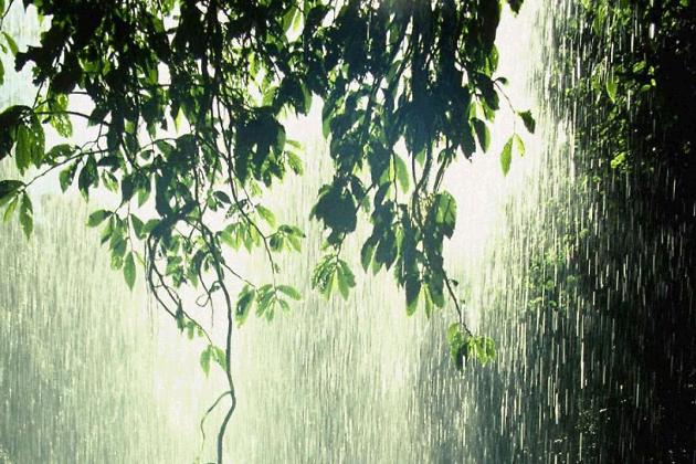 Лес притягивает влагу и дожди (Видео)