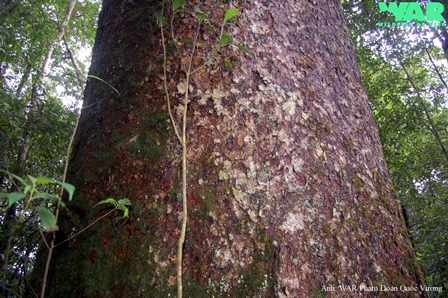 Уцелевшие, древние виды растений по всей планете