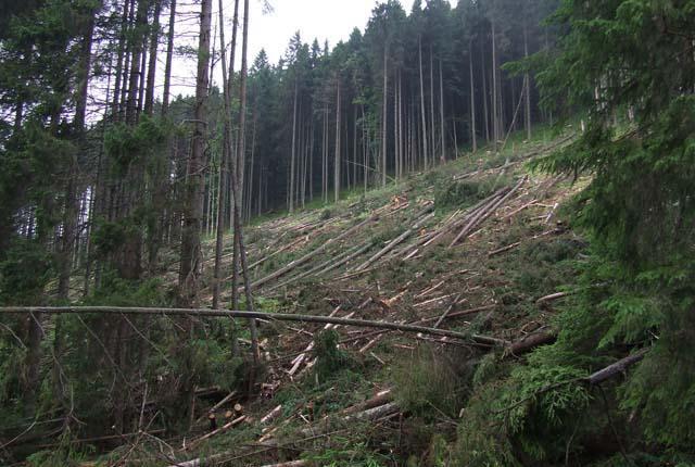 Карпаты останутся без леса, если не остановить вырубку!