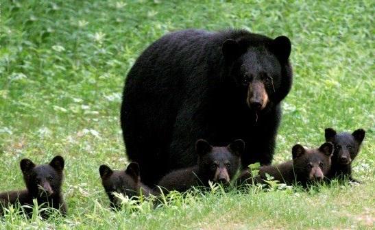 Дружные семьи животных! (Фото)