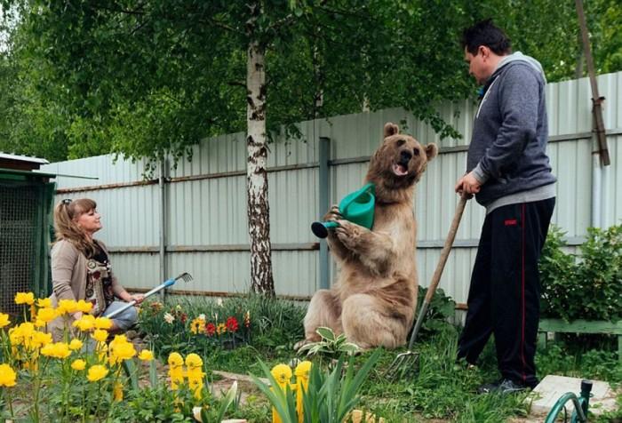 Семья завела себе домашнего медведя и не пожалела (+Видео)