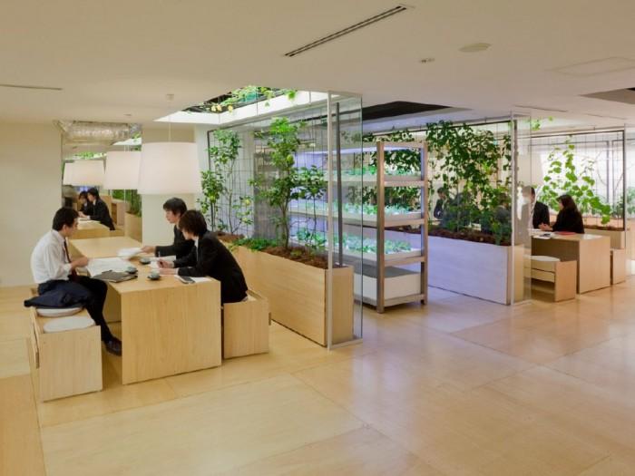 Огород в офисе это реально! Полезная пища прямо на работе (+Фото)