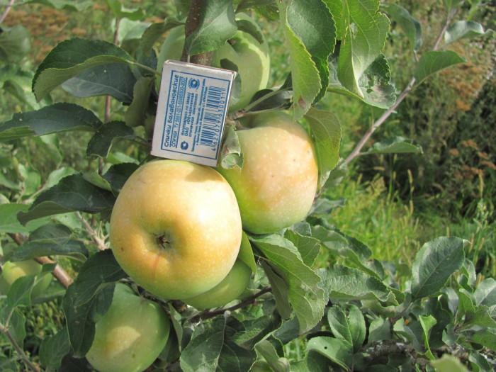 Создайте питомник плодовых деревьев, подходящих для вашего, местного климата (+Фото)
