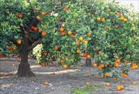 Райский сад на апельсиновых корках (+Видео)