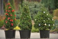 Ёлка от губернатора: к 2025 году все белгородцы будут брать праздничное дерево в аренду