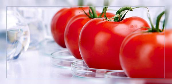 Какие угрозы несут в себе продукты с ГМО? (Видео)