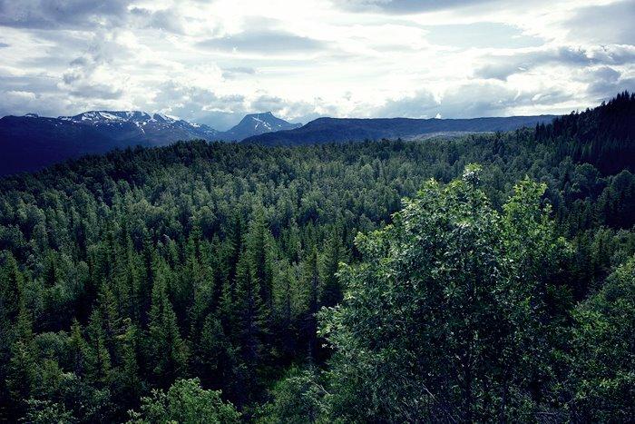 Экономика Швеции держится на ее лесах